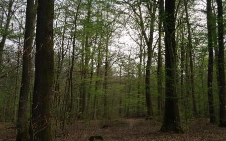 camino y árboles caperucita roja