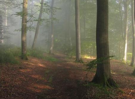 bosque del cuento de caperucita roja
